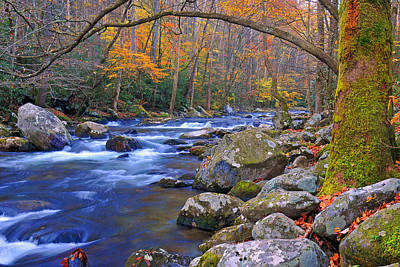 Photograph - Arboreal Arch Over Big Creek by Alan Lenk