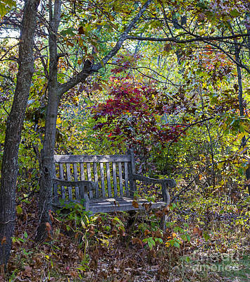 Photograph - Arboretum Bench by Steven Ralser