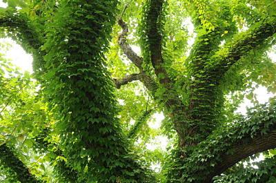 Photograph - Arboretum by Gerald Hiam