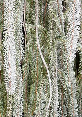 Photograph - Arboretum Hoar Frost 2 by Steven Ralser