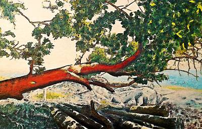 Overhang Digital Art - Arbutus Over Beach by Stanley  Funk