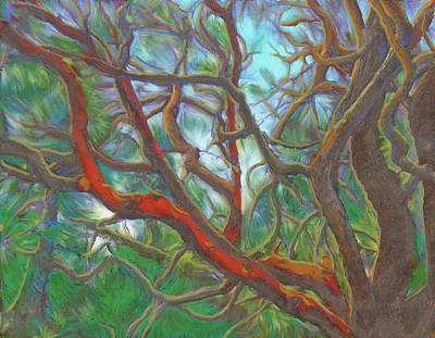 Painting - Arbutus Tree by Hidden  Mountain