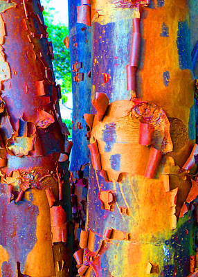 Arbutus Tree Summer Art Print