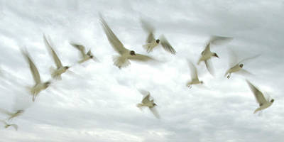 Photograph - Arch Of Terns by Michael Moschogianis
