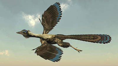 Triassic Photograph - Archaeopteryx Bird Flying In The Sky by Elena Duvernay