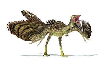 Three Dimensional Photograph - Archaeopteryx Dinosaur by Leonello Calvetti
