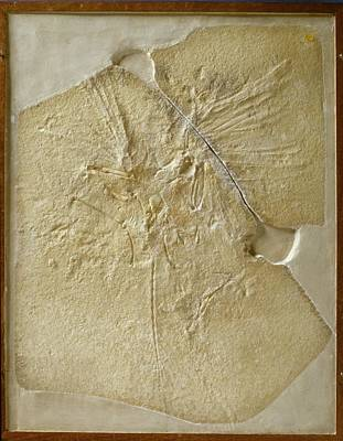Archaeopteryx Fossil Art Print by Natural History Museum, London/science Photo Library