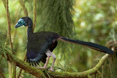 Fossil Reconstruction Photograph - Archaeopteryx Photographic Reconstruction by Paul D Stewart
