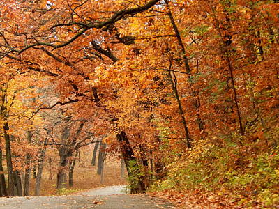 Photograph - Arching Autumn by Wild Thing