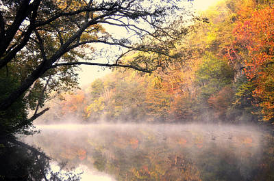 Art Print featuring the photograph Arching Tree On The Current River by Marty Koch