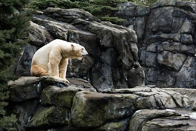 Arctic Bear Art Print