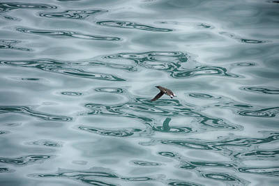 Photograph - Arctic Bird by John Haldane