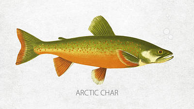 Fish Species Digital Art - Arctic Char by Aged Pixel