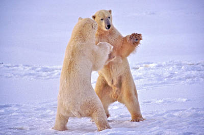 Photograph - Arctic Dance by Randy Green