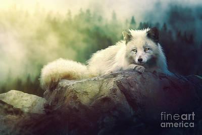 Doze Digital Art - Arctic Fox by Tamara Rouwendal