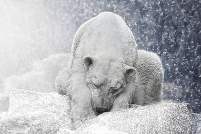 Animals Photos - Arctic Giant Sleeping by Joachim G Pinkawa