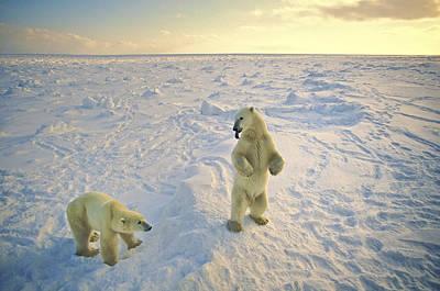Photograph - Arctic Jokers by Randy Green