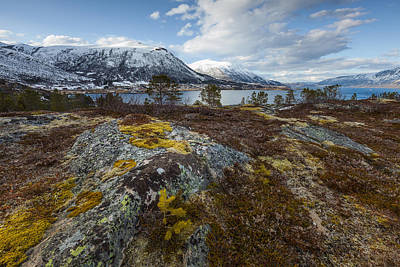 Photograph - Arctic Lichen by Andy Bitterer