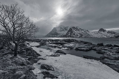 Photograph - Arctic Spring  by Andy Bitterer