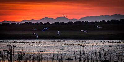 Tern Photograph - Arctic Terns And Ducks by Panoramic Images