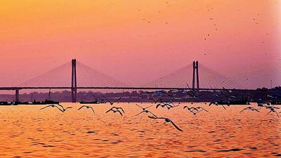 Photograph - Arctic Terns At Sunset On The Ganges - Allahabad India by Kim Bemis