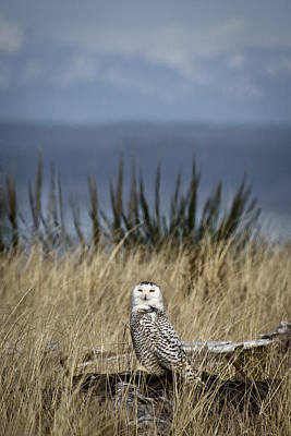 Photograph - Arctic Visitor by Wes and Dotty Weber