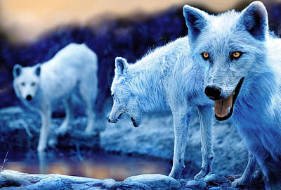 Arctic White Wolves Art Print by Mal Bray