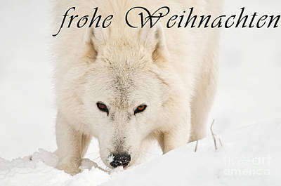 Photograph - Arctic Wolf Christmas Card German 10 by Wolves Only