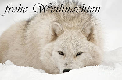 Photograph - Arctic Wolf Christmas Card German 11 by Wolves Only