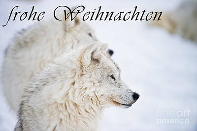 Photograph - Arctic Wolf Christmas Card German 12 by Wolves Only