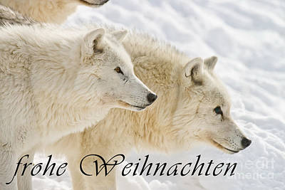 Photograph - Arctic Wolf Christmas Card German 13 by Wolves Only