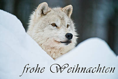Photograph - Arctic Wolf Christmas Card German 14 by Wolves Only