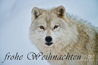 Photograph - Arctic Wolf Christmas Card German 15 by Wolves Only