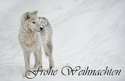 Photograph - Arctic Wolf Christmas Card German 8 by Wolves Only