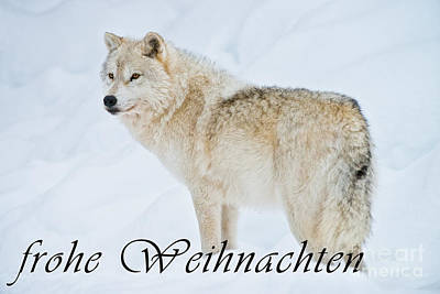 Photograph - Arctic Wolf Christmas Card German 9 by Wolves Only