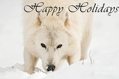 Photograph - Arctic Wolf Happy Holidays Card 10 by Wolves Only