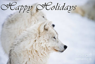 Photograph - Arctic Wolf Happy Holidays Card 12 by Wolves Only