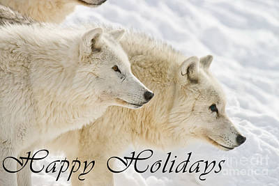 Photograph - Arctic Wolf Happy Holidays Card 13 by Wolves Only