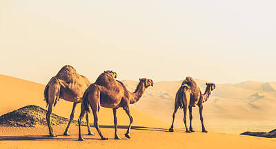 Are We Lost  Art Print by Ahmed Rashed