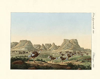 South Africa Drawing - Area In South Africa At The Forland Of Good Hope by Splendid Art Prints