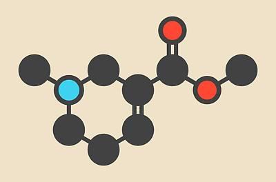 Atom Photograph - Arecoline Areca Nut Stimulant Molecule by Molekuul