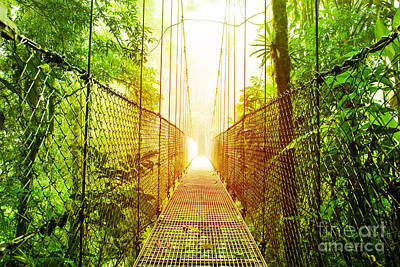 Arenal Photograph - Arenal Hanging Bridges Park Of Costa Rica by Anna Om