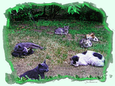 Photograph - Argentina Cat Park by Joan  Minchak