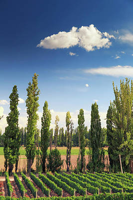 Argentina, Mendoza, Wineries Art Print by Michele Falzone