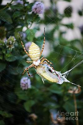 Achieving - Argiope Spider Top Side Verticle by Sheryl Young