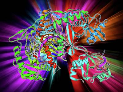 Molecular Structure Photograph - Argonaute Protein And Microrna by Laguna Design