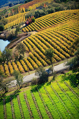 Arial Golden Vineyards Original by Kathy Sidjakov