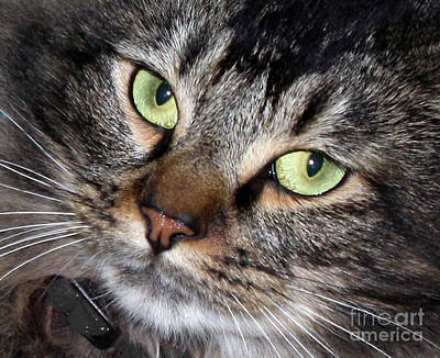 Photograph - Aria's Green Eyes by Chris Anderson