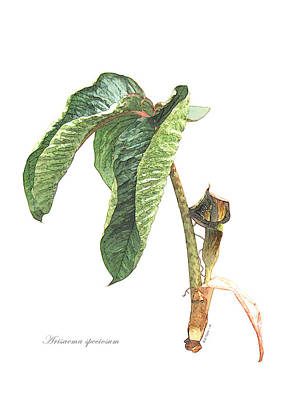 Digital Art - Arisaema Speciosum by Helene U Taylor