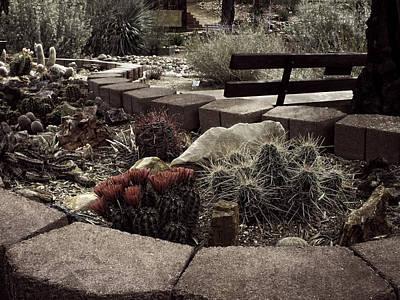 Photograph - Arizona Arid Garden by Lucinda Walter